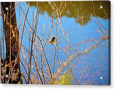 Bird Perched At The Lake Acrylic Print