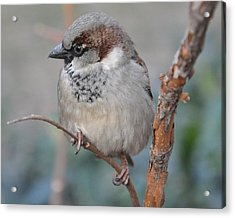 Bird Shot Acrylic Print