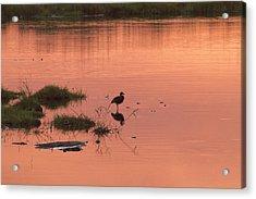 Acrylic Print featuring the photograph Bird Silhouette  by Gigi Ebert