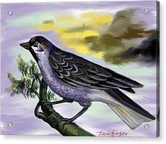 Bird Acrylic Print by Twinfinger