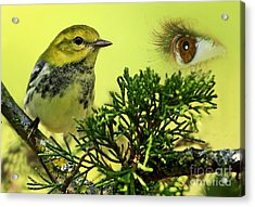 Bird Watching Acrylic Print by Inspired Nature Photography Fine Art Photography