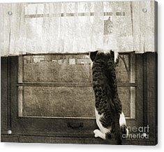 Bird Watching Kitty Cat Bw Acrylic Print by Andee Design