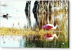 Bird Watching Acrylic Print by Van Ness