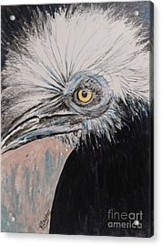 Birdeye Crown Horn Bill Acrylic Print