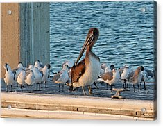 Birds - Among Friends Acrylic Print by HH Photography of Florida