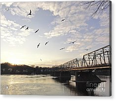 Birds And Bridges Acrylic Print