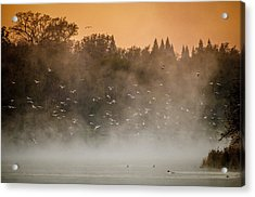 Birds And The Fog  Acrylic Print