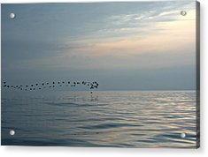 Birds At Sunset In Sister Bay Acrylic Print