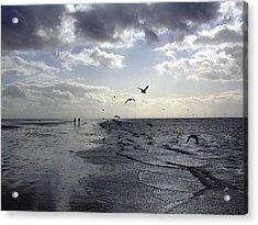 Birds At The Beach 2 Acrylic Print