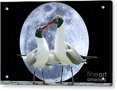 Acrylic Print featuring the photograph Birds Do It... by Mariarosa Rockefeller