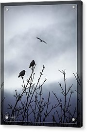 Birds For Breakfast Acrylic Print by Glenn Feron