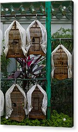 Birds In Cages For Sale At A Bird Acrylic Print by Panoramic Images