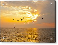 Acrylic Print featuring the photograph Birds In Lake Erie Sunset by David Coblitz