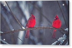 Birds Of A Feather Acrylic Print by Carrie Ann Grippo-Pike