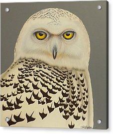 Birds Of A Feather Acrylic Print by Darren Robinson
