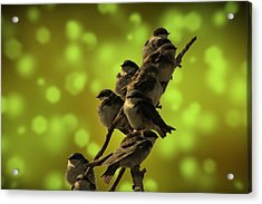 Birds Of A Feather Acrylic Print by David Dehner