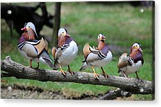 Birds Of A Feather Acrylic Print by Marty Fancy