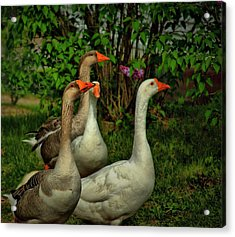Birds Of A Feather Acrylic Print