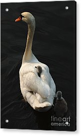 Birds Of A Feather Stick Together Acrylic Print by Bob Christopher