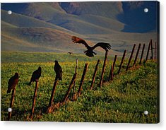 Acrylic Print featuring the photograph Birds On A Fence by Matt Harang