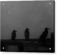 Birds On A Fence Acrylic Print by Michelle O'Neill