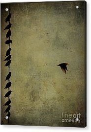 Birds On A Wire 2 Acrylic Print by Jim Wright