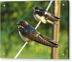 Birds On A Wire Acrylic Print