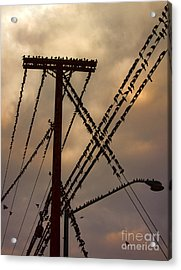Birds On A Wire Acrylic Print by Gregory Dyer