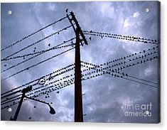 Birds On A Wire In Blue Acrylic Print by Gregory Dyer
