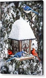 Birds On Bird Feeder In Winter Acrylic Print by Elena Elisseeva