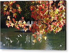Birds Over Water Acrylic Print by Jocelyne Choquette