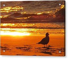 Bird's Paradise Acrylic Print by Nikki McInnes