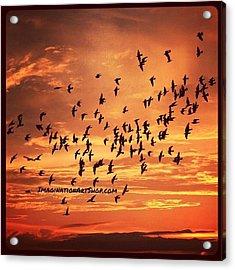 #birds #photography #sunset #fly Acrylic Print