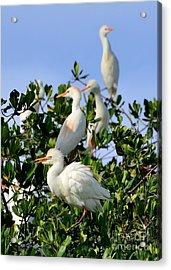 Birds Quartet Acrylic Print