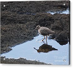 Bird's Reflection Acrylic Print by Belinda Greb