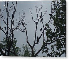 Acrylic Print featuring the photograph Birds by Fortunate Findings Shirley Dickerson