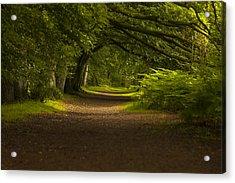 Birnam Woods Landscape Wall Art Acrylic Print