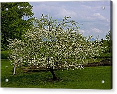 Acrylic Print featuring the painting Birth Of Apples by John Haldane