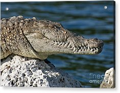 Acrylic Print featuring the photograph Biscayne National Park Florida American Crocodile by Paul Fearn