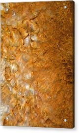 Biscuit Basin Bacterial Mat Acrylic Print by Bruce Gourley
