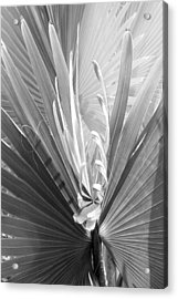 Acrylic Print featuring the photograph Bismark Palm by Jim Snyder