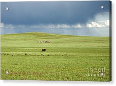 1009a Bison And Riders Acrylic Print