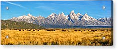 Bison Beneath The Tetons Limited Edition Panorama Acrylic Print