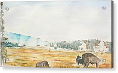 Bison In Yellowstone Acrylic Print by Geeta Biswas