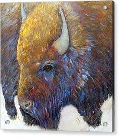 Bison Acrylic Print by Loretta Luglio