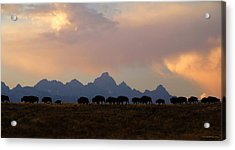 Bison March Acrylic Print
