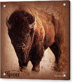 Bison Acrylic Print by Mindy Bench