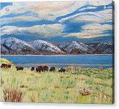 Bison On Antelope Island Acrylic Print