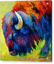 Bison Portrait II Acrylic Print by Marion Rose