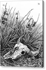 Acrylic Print featuring the painting Bison Skull by Aaron Spong